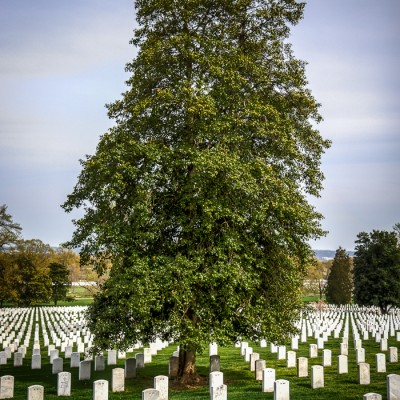 Arlington National Cemetery in Washington D.C., USA